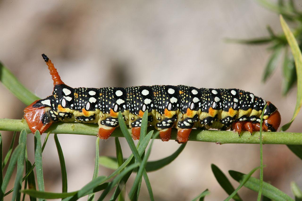 праге картинка двух гусеницах датчиком