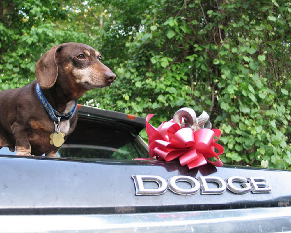 Dachshund Dodge | Flickr - Photo Sharing!